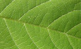 4个特写镜头绿色叶子 免版税库存照片