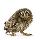 4个猫头鹰星期新 免版税库存照片
