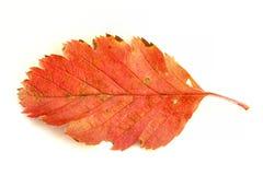 4个秋天颜色 库存照片