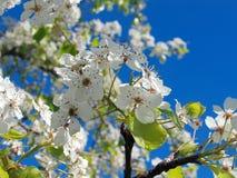 4个花结构树 免版税图库摄影
