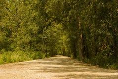 4个路径森林 免版税图库摄影