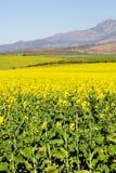4农场 免版税库存照片