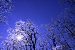 4冰结构树 免版税库存照片