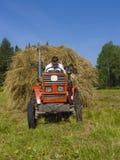 4割晒牧草西伯利亚 库存照片