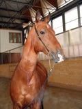 4匹马视域 免版税库存照片