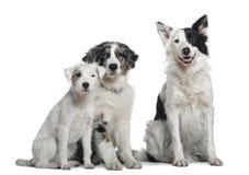 4博德牧羊犬老教区牧师罗素年 免版税库存图片