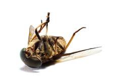 4只停止的昆虫 免版税库存图片
