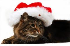 4只猫圣诞节 库存图片