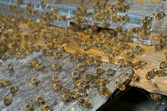 4只蜂项 免版税图库摄影