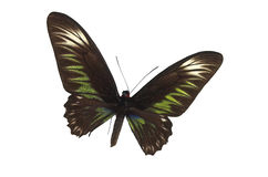 4只蝴蝶绿色 图库摄影
