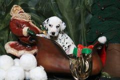 4只达尔马提亚狗小狗s圣诞老人雪橇 库存照片