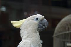 4只鹦鹉白色 免版税图库摄影