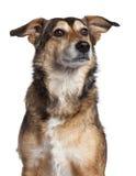 4品种接近的狗混杂的老年 免版税库存图片