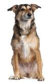 4品种狗混杂的老坐的年 免版税库存图片