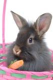 4复活节狮子兔子 库存照片