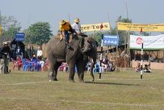 4头大象马球 库存照片