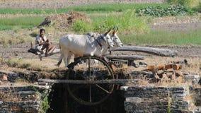 4收集的印度水 免版税库存图片