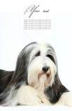 4有胡子的大牧羊犬老年 库存图片