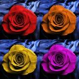 4朵五颜六色的玫瑰 免版税库存照片