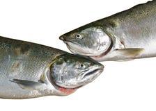 4条三文鱼 免版税库存照片