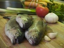 4条新鲜的鳟鱼 图库摄影