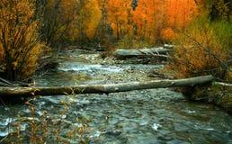 4条河木头 免版税图库摄影