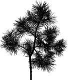 4查出的屏蔽结构树 免版税库存照片
