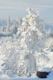 4森林没有多雪 免版税库存照片