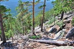 4棵卡扎克斯坦北部杉木岩石 库存照片