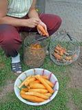 4棵红萝卜剥皮 免版税图库摄影