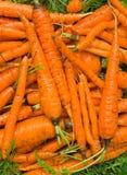 4棵红萝卜堆 免版税库存图片