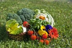4棵蔬菜 免版税库存图片