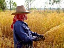 4泰国的农夫 库存图片