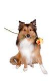 4浪漫的狗 库存照片