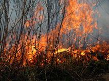4火焰 库存图片