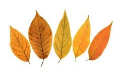 4片秋天叶子 库存照片