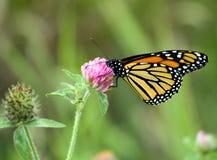 4蝴蝶 库存照片