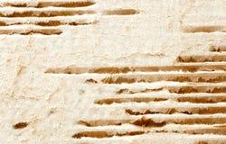 4被撕毁的纸板纹理 库存照片