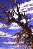 4鬼的结构树 免版税库存图片