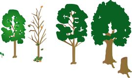 4 árboles, un árbol joven y un tronco muerto. crecimiento del árbol Fotografía de archivo libre de regalías