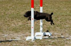4 σκυλιά Στοκ Εικόνες