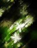 4 абстрактных цветка Стоковая Фотография