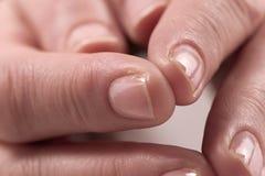 4 женских руки Стоковая Фотография