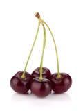 4 зрелых вишни Стоковое Фото