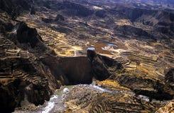 4 кондора colca самонаводят valey террасы inca Стоковые Фотографии RF