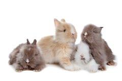 4 кролика гребут детенышей Стоковые Фото