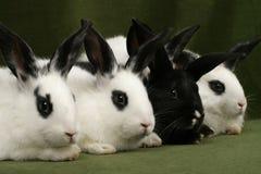 4 кролика стоковые изображения rf