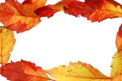 4 листь кадра Стоковые Фотографии RF