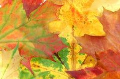 4 листь предпосылки Стоковое Фото