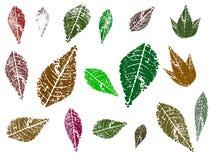 4 листь Стоковая Фотография